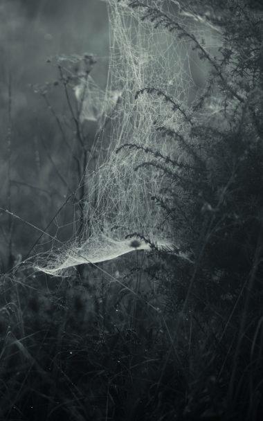 Spiderweb Fog Bw 800x1280 380x608