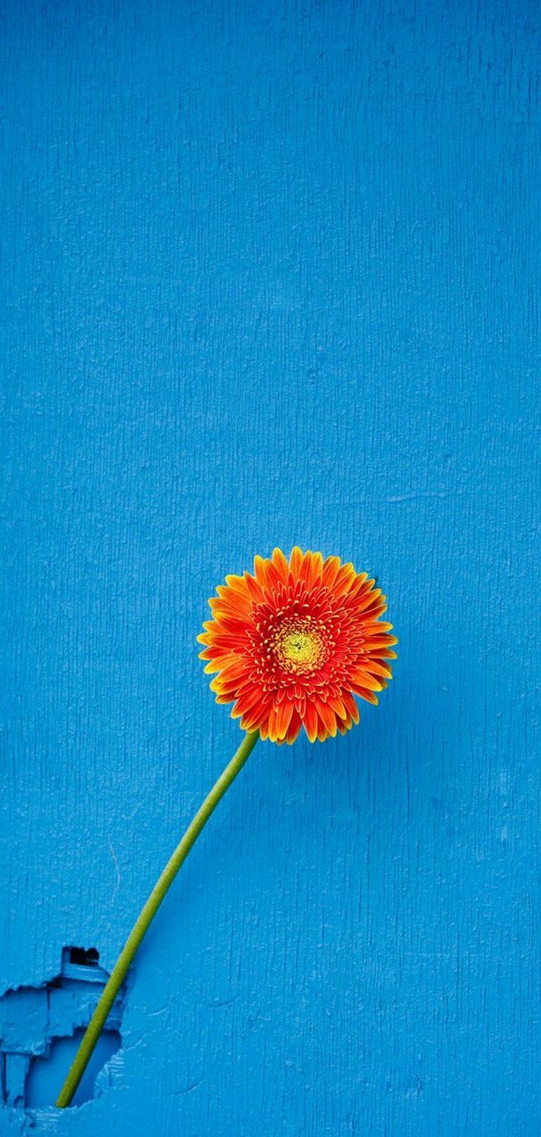 Texture Back Orange Flower 1080x2270 768x1614