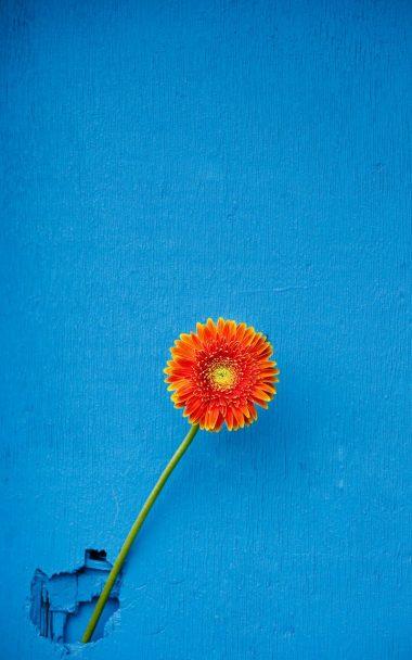Texture Back Orange Flower 800x1280 380x608