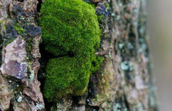 Tree Bark Wood Moss 1080x2270 340x220