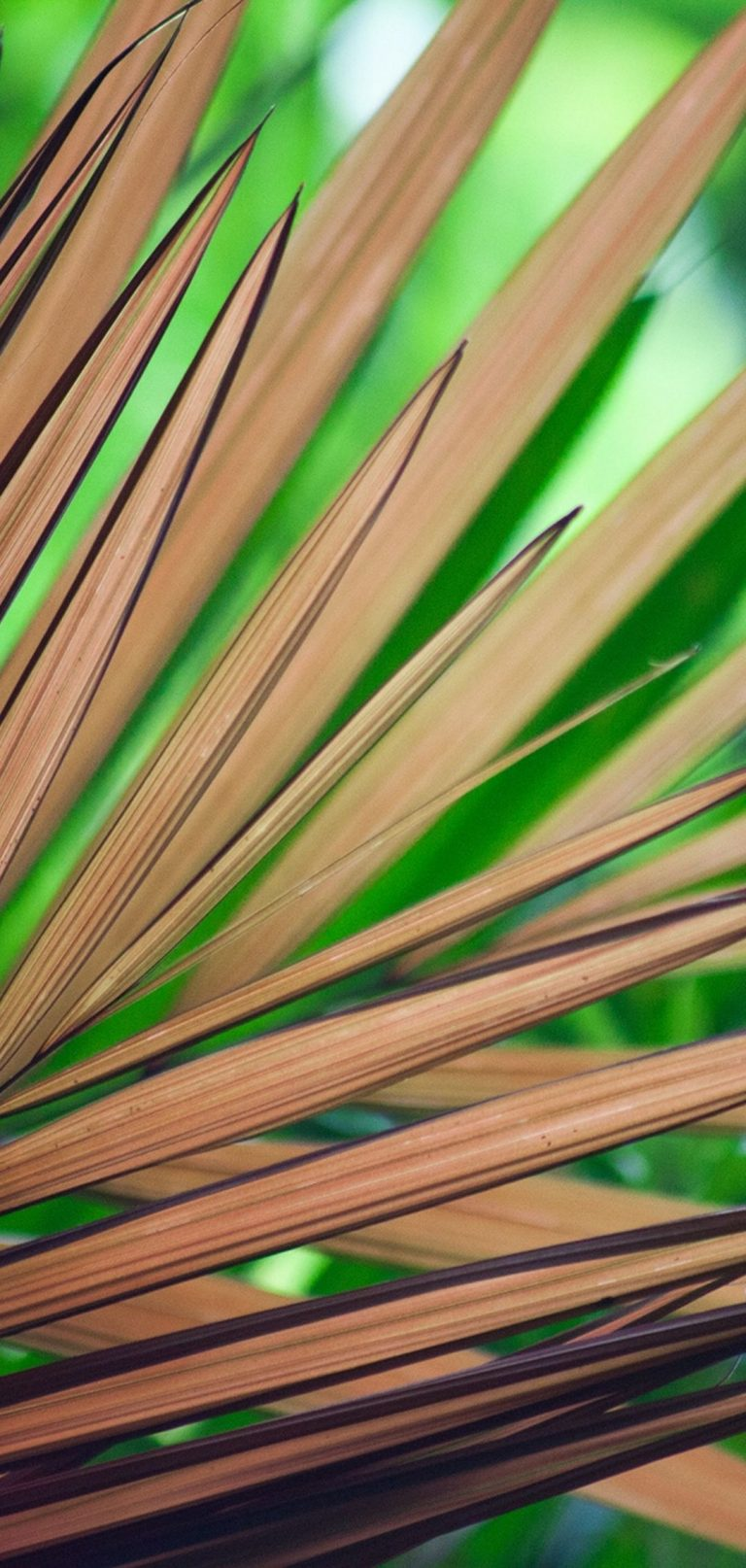 Tree Branches Leaves Tree 1080x2270 768x1614