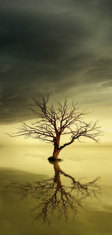 Tree Lonely Reflection 1080x2270 380x799