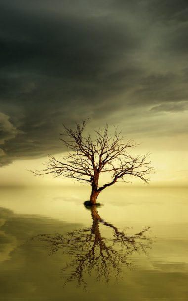 Tree Lonely Reflection 800x1280 380x608