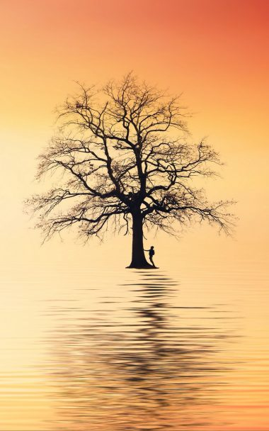 Tree Silhouette Lonely 800x1280 380x608