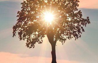 Tree Sunlight Horizon 1080x2270 340x220