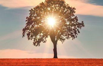 Tree Sunlight Horizon 800x1280 340x220