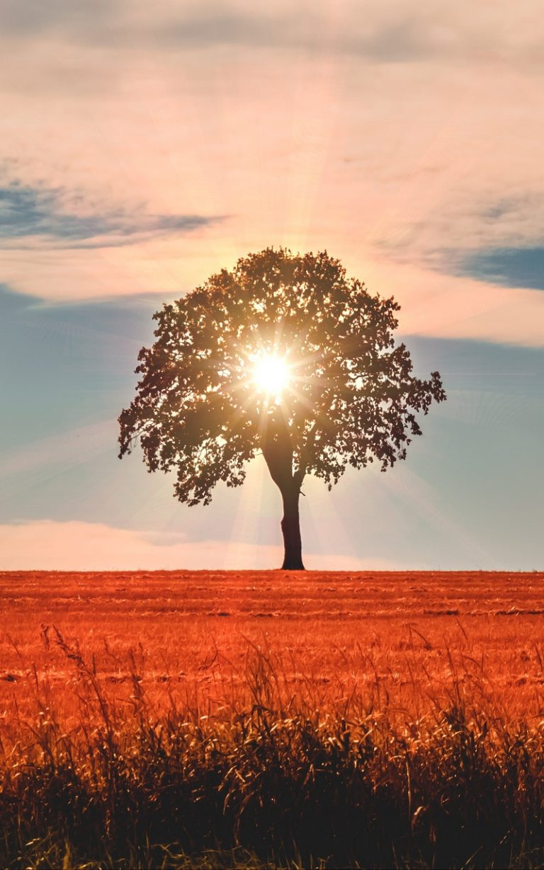 Tree Sunlight Horizon 800x1280 768x1229