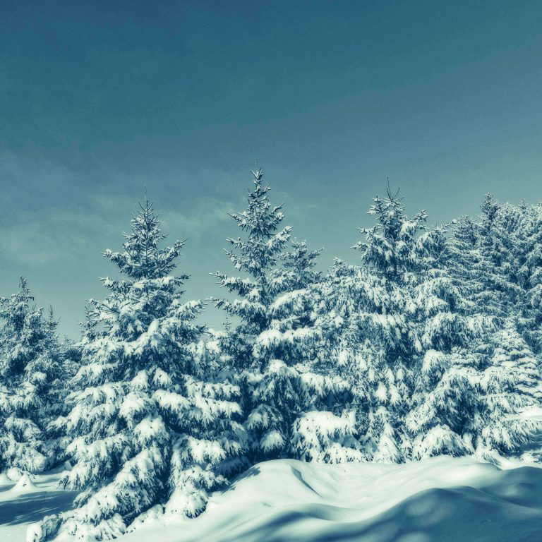 Trees Snow Winter 2780x2780 768x768