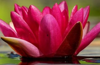 Waterlily Flower Petals Water 1080x2270 340x220