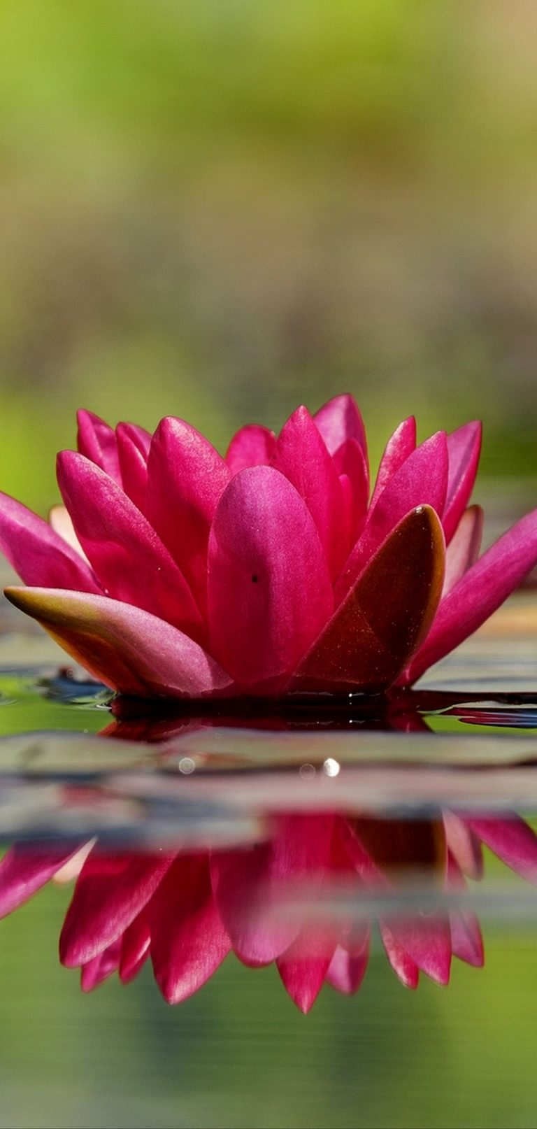 Waterlily Flower Petals Water 1080x2270 768x1614