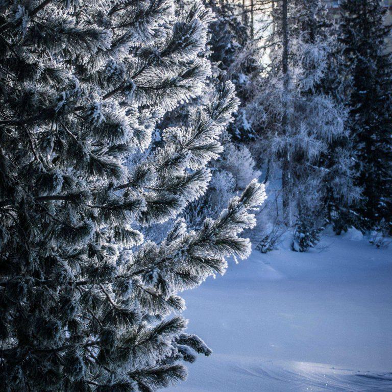 Winter Snow Tree 2780x2780 768x768