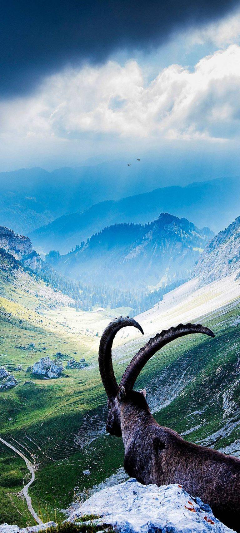 Animal Mountains Landscape 1080x2400 768x1707