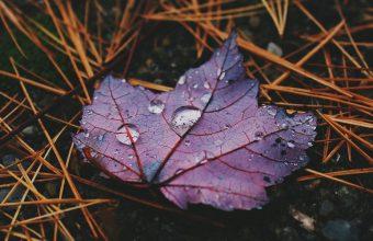 Autumn Leaf Drops 1024x600 340x220