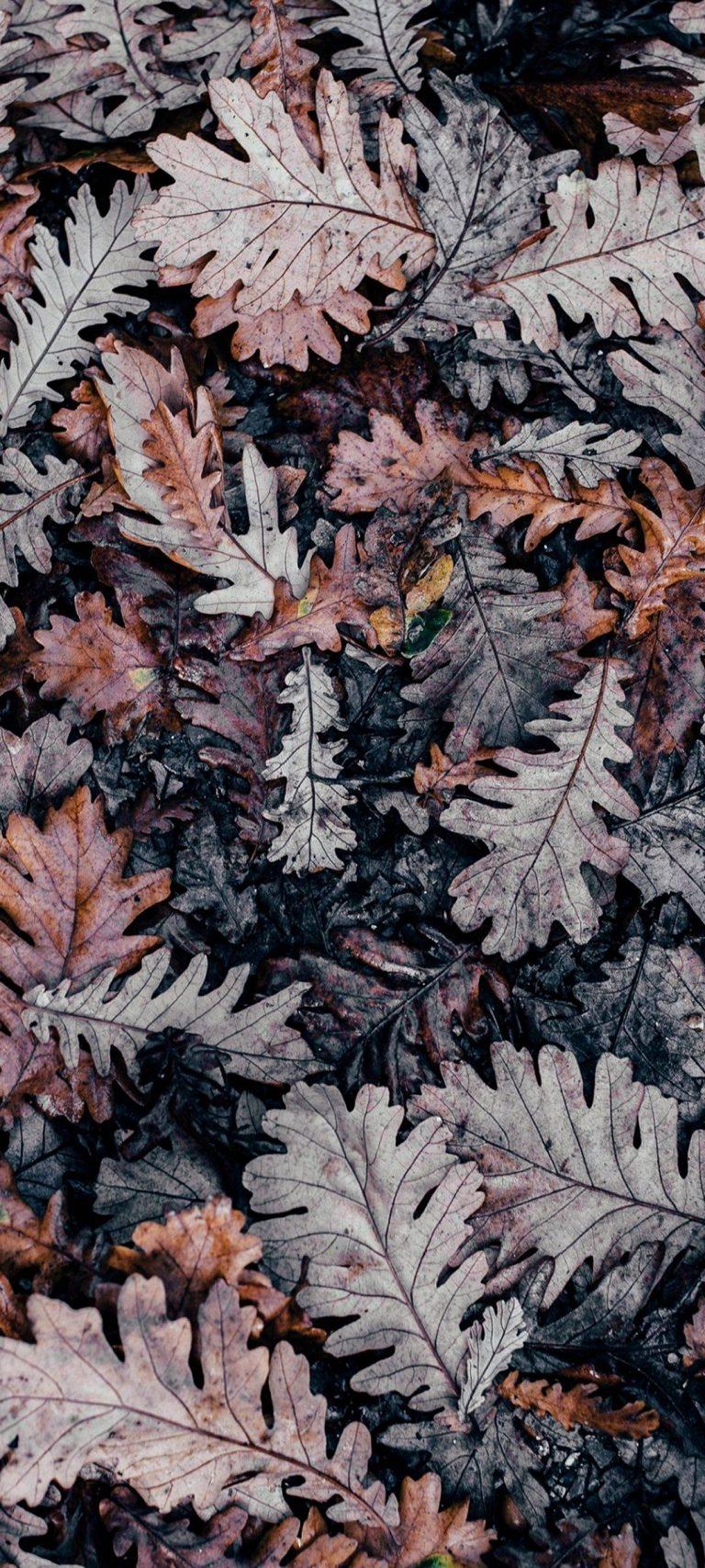 Autumn Leaves Brown 1080x2400 768x1707