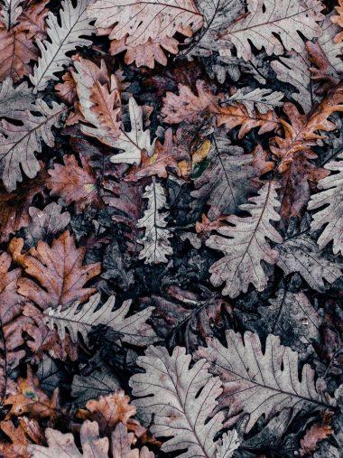 Autumn Leaves Brown 768x1024 380x507