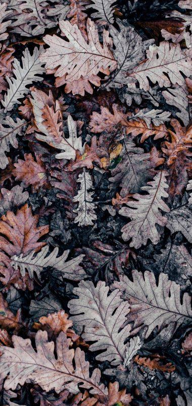 Autumn Leaves Brown Wallpaper 1440x3040 380x802