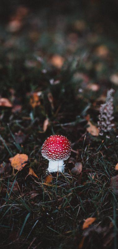 Autumn Mushroom Macro Wallpaper 1440x3040 380x802