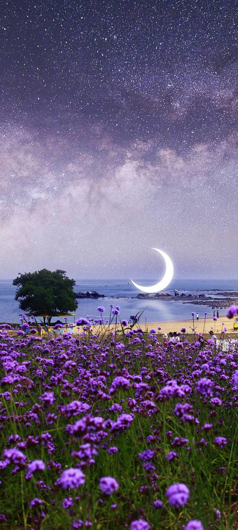 Beautiful Purple Flowers View 1080x2400 768x1707