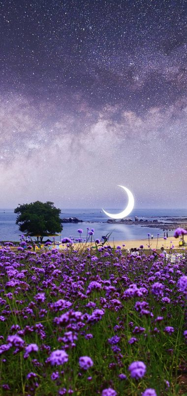 Beautiful Purple Flowers View Wallpaper 1440x3040 380x802