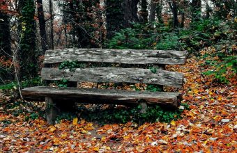 Bench Autumn Park Trees 1024x600 340x220