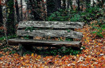 Bench Autumn Park Trees 1536x864 340x220