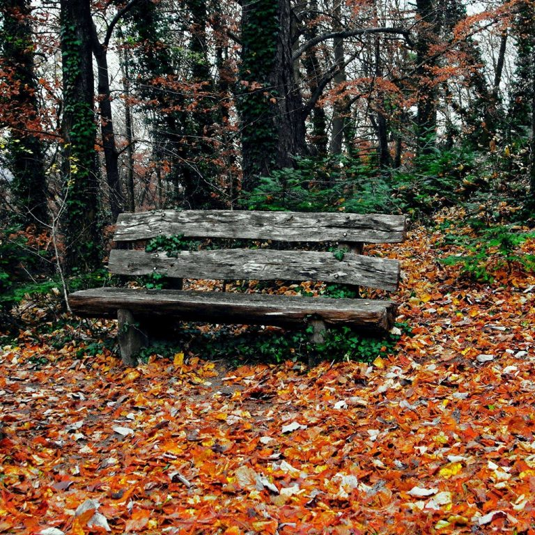 Bench Autumn Park Trees Wallpaper 1024x1024 768x768