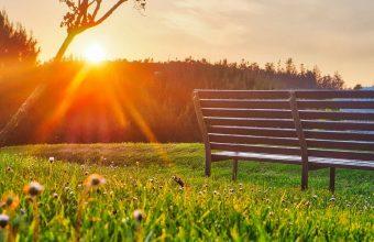 Bench Park Sunlight Summer 1024x600 340x220