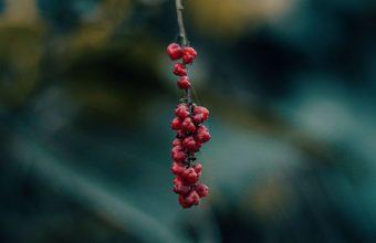 Berry Branch Macro 1024x600 340x220