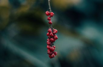 Berry Branch Macro 1536x864 340x220