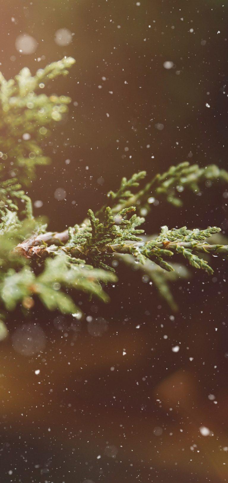 Branches Snow Glare Wallpaper 1440x3040 768x1621