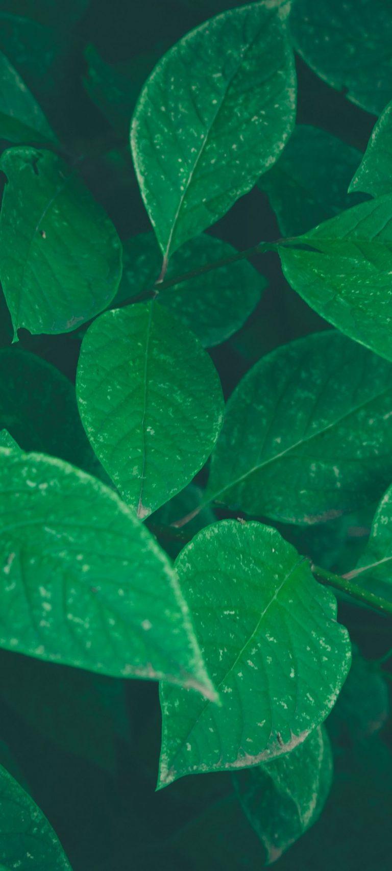 Bushes Leaves Herbs 1080x2400 768x1707