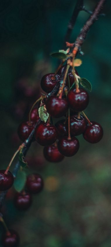 Cherries Berries Branch 1080x2400 380x844