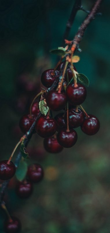 Cherries Berries Branch Wallpaper 1440x3040 380x802