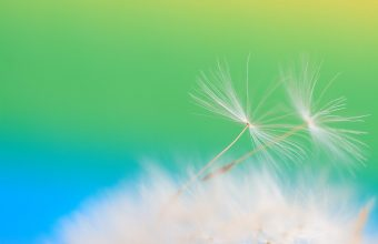 Dandelion Seeds Feathers Flight Light 1920x1280 340x220