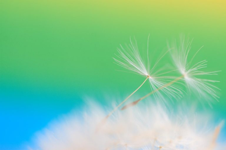 Dandelion Seeds Feathers Flight Light 1920x1280 768x512