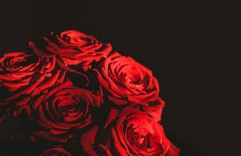 Dark Red Flowers Bouquet Wallpaper 1440x3040 340x220