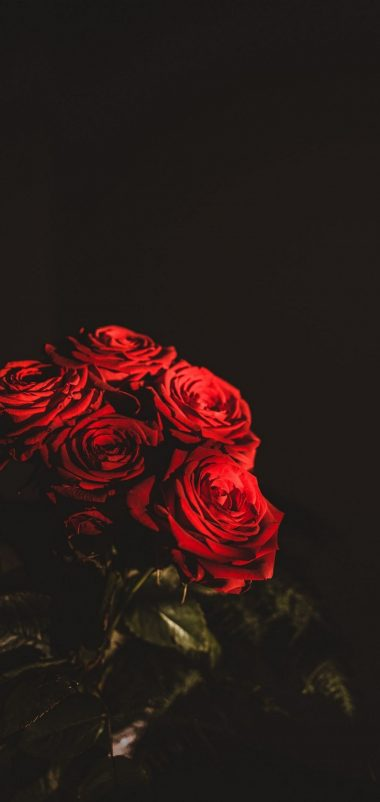 Dark Red Flowers Bouquet Wallpaper 1440x3040 380x802