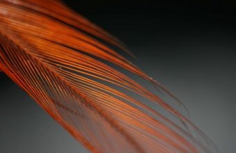 Feather Color Feathered Feathers Form 1920x1200 340x220
