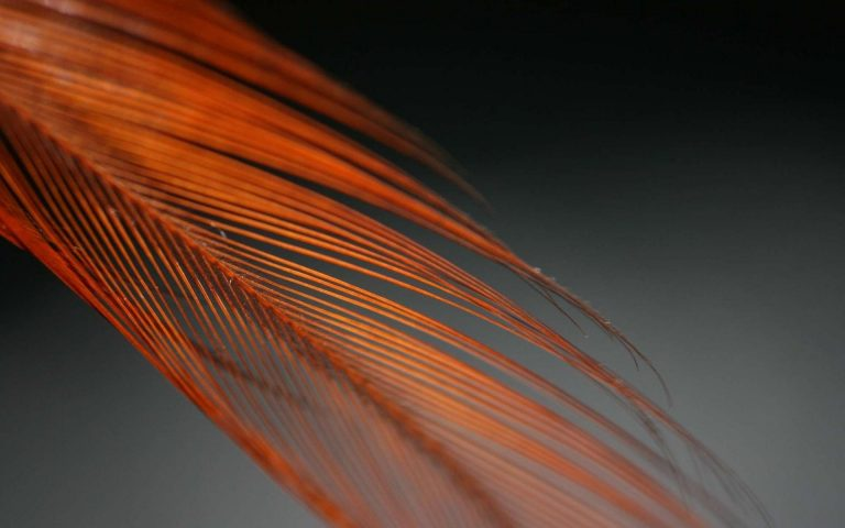 Feather Color Feathered Feathers Form 1920x1200 768x480
