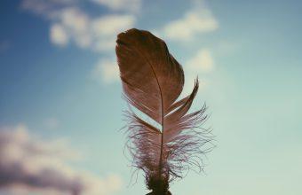Feather Sky Blur 3888x2592 340x220