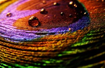 Feather Surface Drops Multicolored 1680x1050 340x220