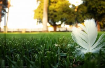Feather Wallpaper 03 1680x1050 340x220