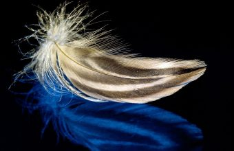Feather Wallpaper 04 2321x1667 340x220