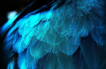 Feather Wallpaper 10 1920x1200 340x220