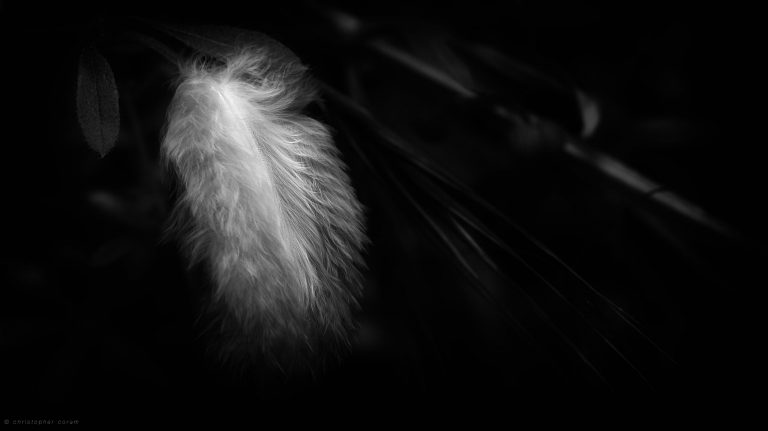 Feather Wallpaper 11 2560x1438 768x431