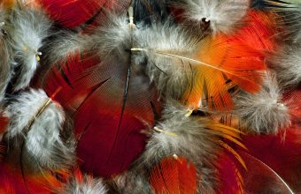 Feather Wallpaper 14 1920x1200 340x220