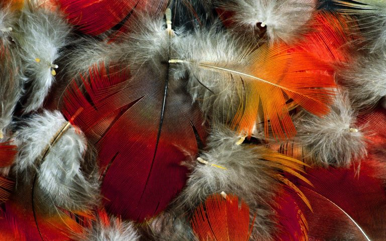 Feather Wallpaper 14 1920x1200 768x480
