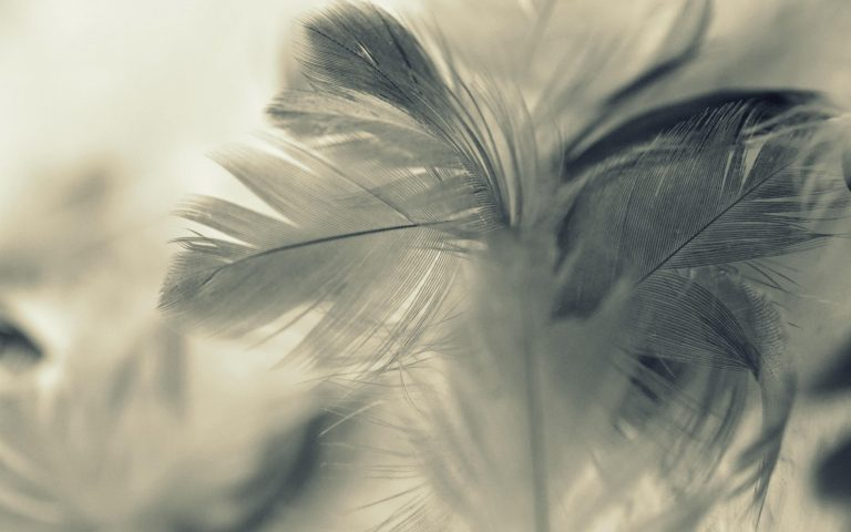 Feather Wallpaper 16 2560x1600 768x480