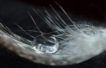 Feather Wallpaper 23 2560x1600 340x220