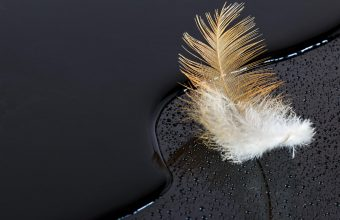 Feather Wallpaper 31 3840x2160 340x220